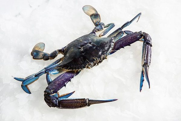 Australian Whole Blue Swimmer Crab