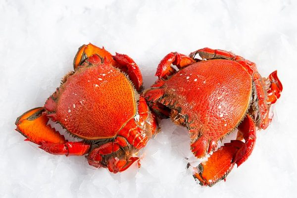 Cooked Spanner Crab Meat (500g)